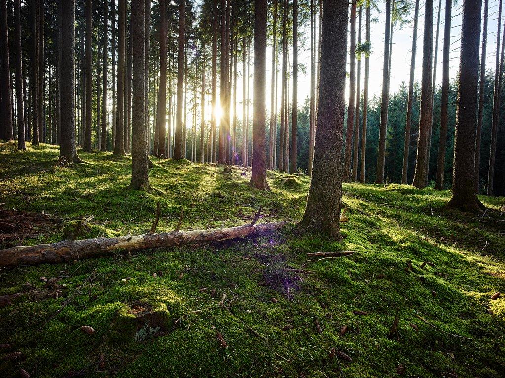 Waldlichtung-Agentur-Baumann.jpg