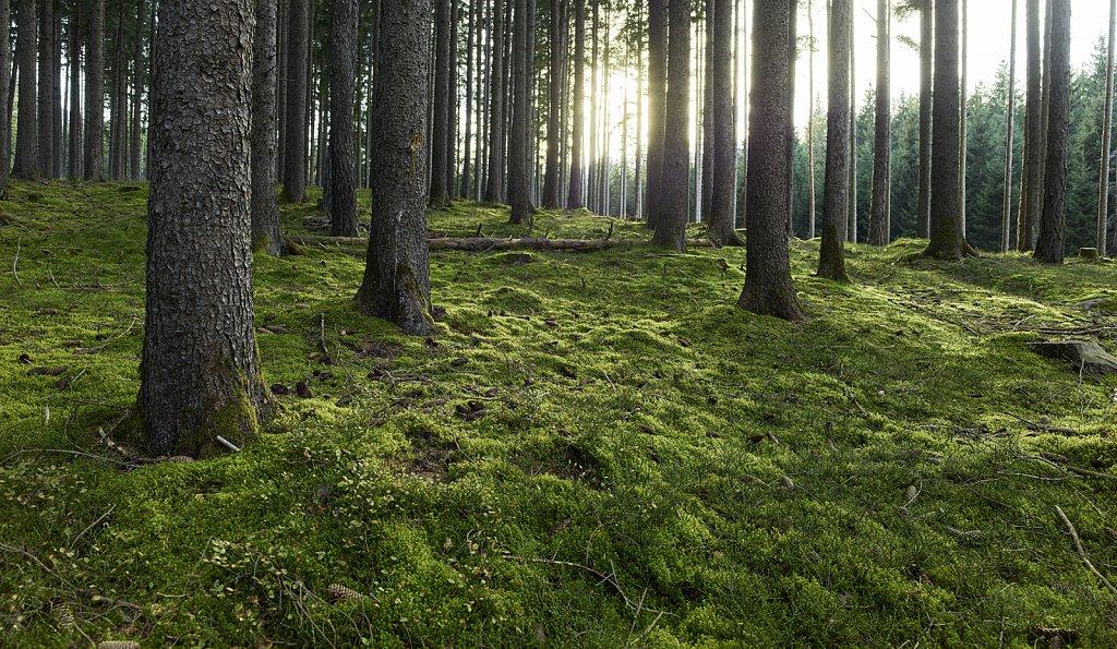 Waldlichtung-Agentur-Baumann-02.jpg
